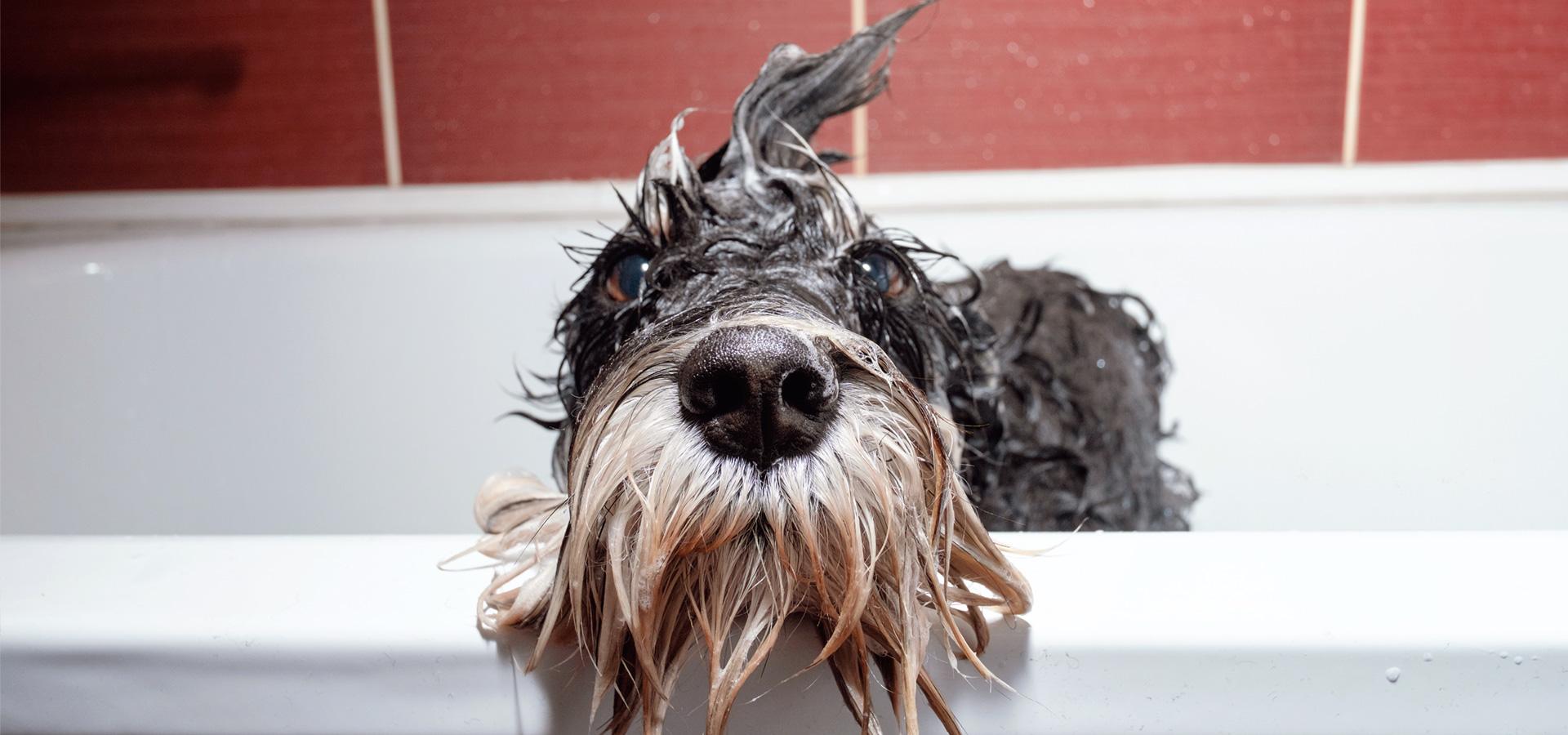 nasser Hund in Badewanne