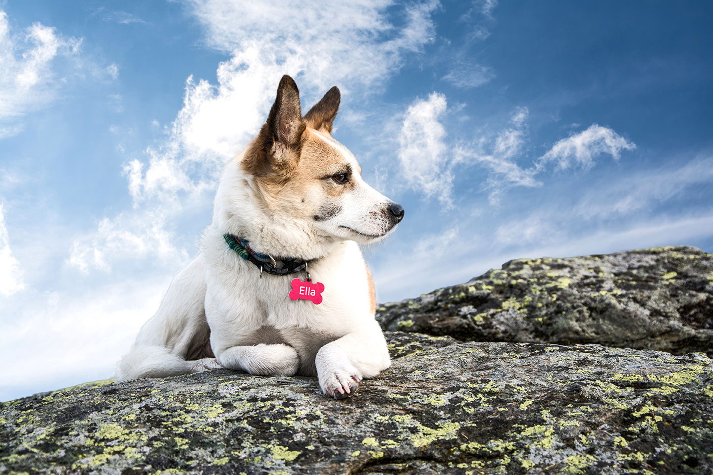 weiß Hund rosa marke