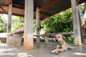 ein Hund liegt im Schatten einer überdachten Terrasse