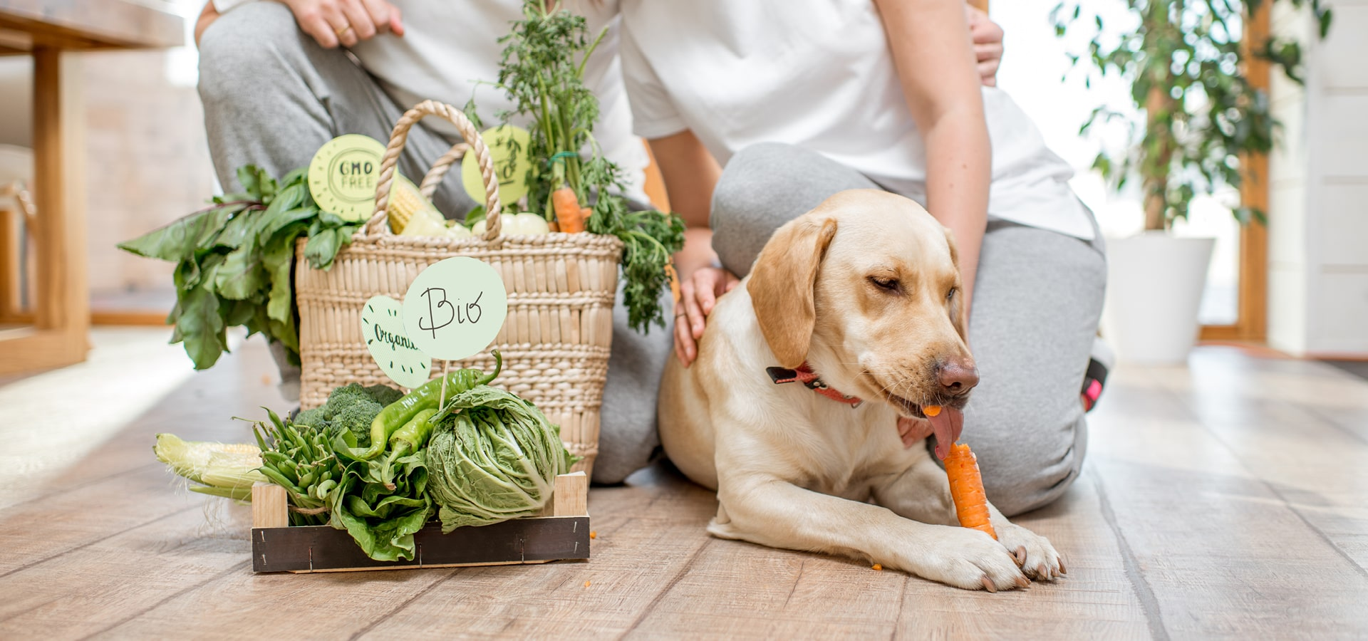 hunde vegetarisch ernähren