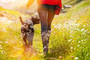 ein dunkler hund geht mit einer frau dirch eine blumenwiese, die sonne scheint, sie sind von hinten zu sehen