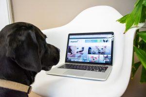 schwarzer labrador schaut auf laptop, auf dem man die dogtales-startseite sieht